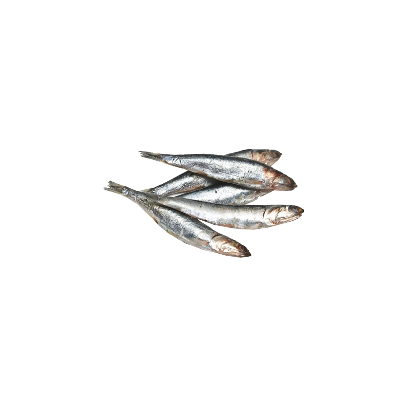 anchovy.png