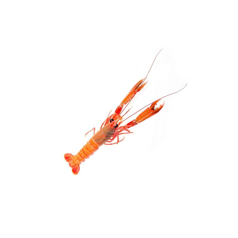 crayfish-b.png