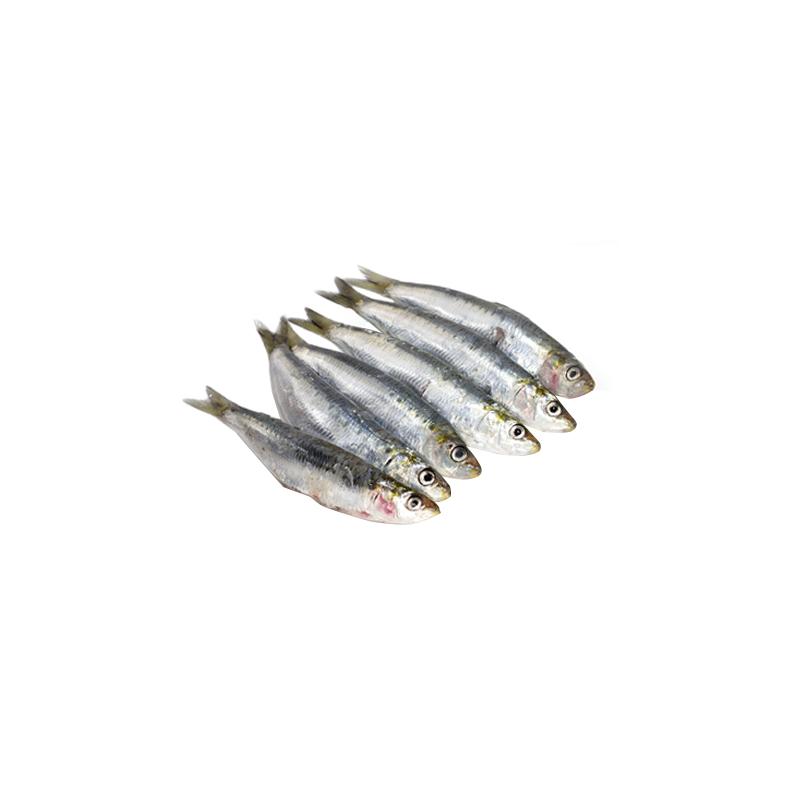 sardina.png